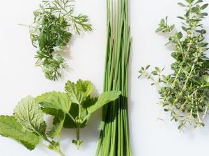 Soma Herbs for Yoga // Eat & Breathe // Ayurveda for a Modern Life
