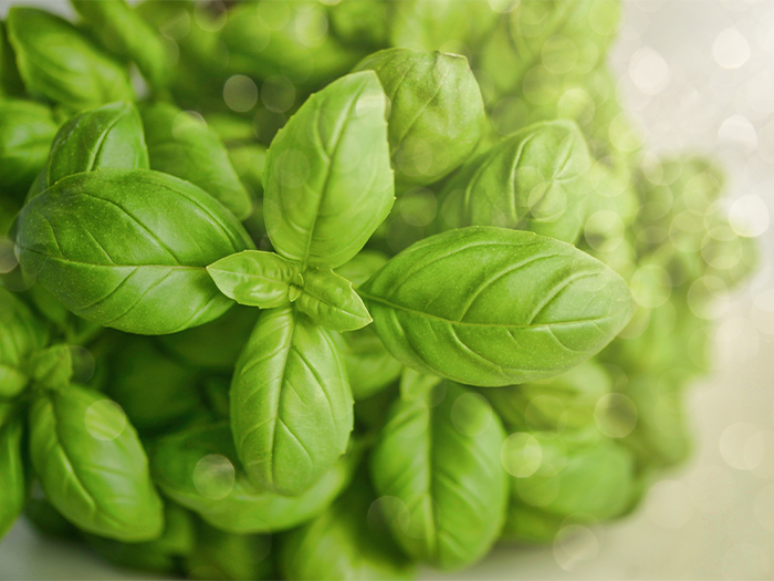 How does basil benefit the digestive system? | Eat & Breathe